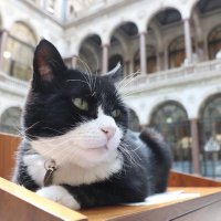 Palmerston (@DiploMog) Twitter profile photo
