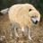 SelfWolves's avatar'