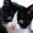 CaTuber猫たかDチャンネル