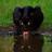 Carlsen (@ph00ligan) Twitter profile photo