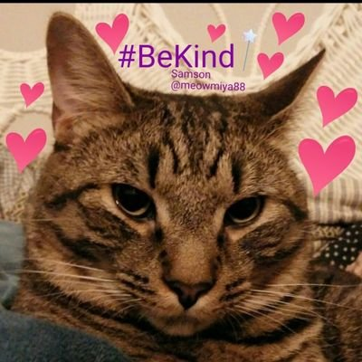 Samson🐱 #BeKind ❤