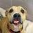 Buddy Dog Humane Society (Sudbury, MA)