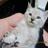 猫厳選動画♥