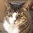 自慢の長さです #全日本猫伸ばし協会