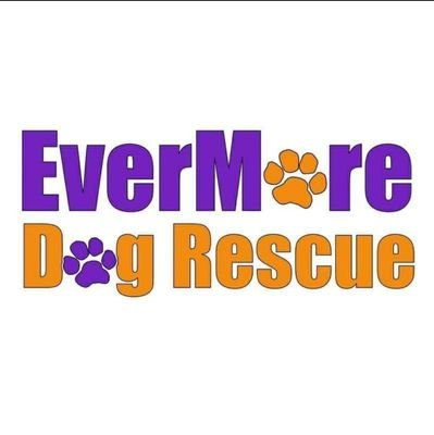 EverMore Dog Rescue
