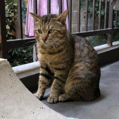雉猫 日米台猫軍事同盟 TFC.2949