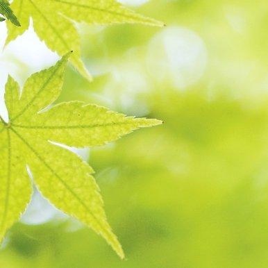 bonsai note