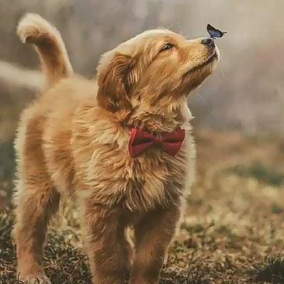 pup 🐶