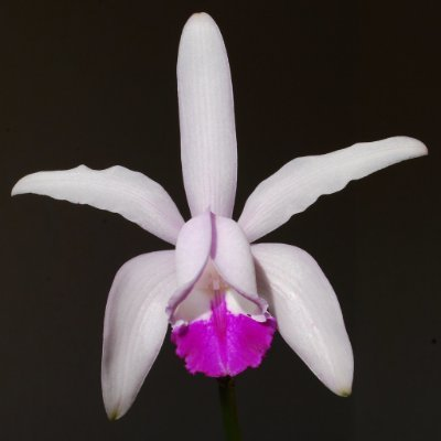 IUCN Orchid Specialist Group