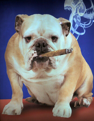 @CigarBulldog
