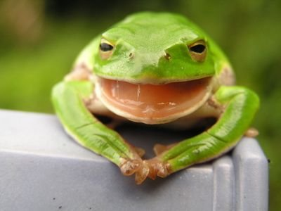 thefrognews