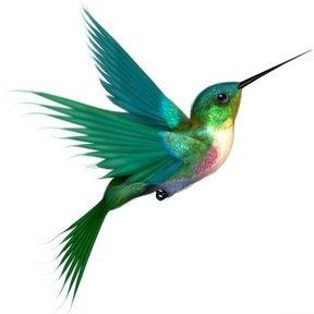 K1 Hummingbirds