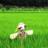 農業・農家・農園の研究家