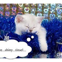 tinselkitty | Social Profile