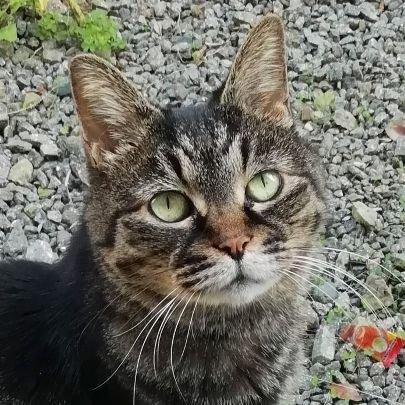 kesha cat