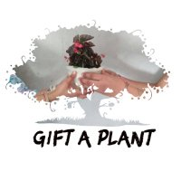 Get Free Plant
