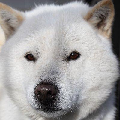 犬 名前 白い