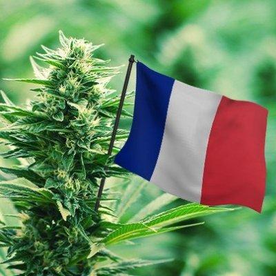 cannabis_france
