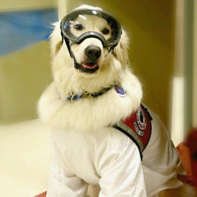 Sampson the Service Dog