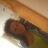 Jessica Maher - Jessicamaher_