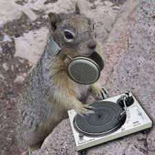 Squirrel Top 40 (@squirrel_top40) Twitter profile photo