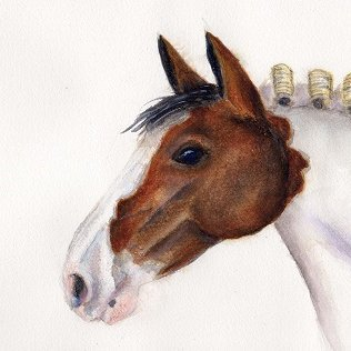 Barrister's Horse