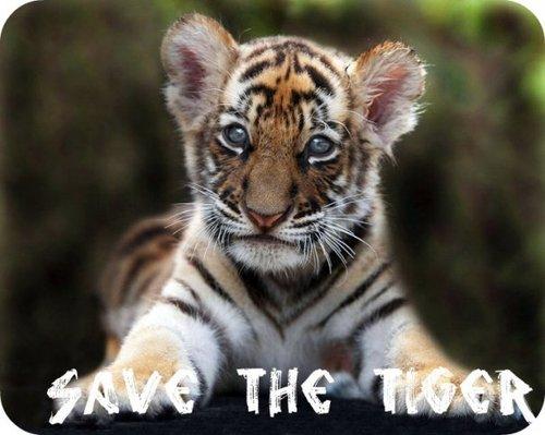 Save the Tiger (@SavingTiger) | Twitter