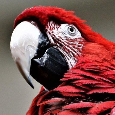 Parrot Tips