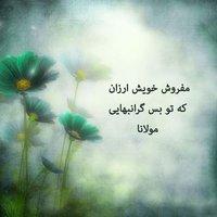 SalehRa02252584