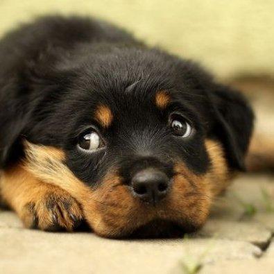 Rescue Animal (@RescueAnimaldk) Twitter profile photo