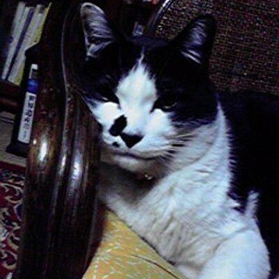 くろしろ猫's Twitter Profile Picture