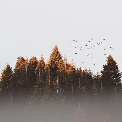 @nature__Animals