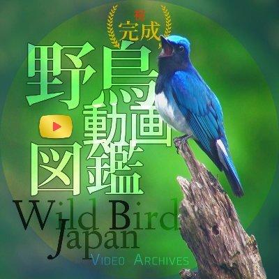 野鳥動画図鑑 660種1,181本公開中 - Official - Wild Bird Japan