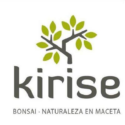 Kirise Tienda Bonsai At Kirisebonsai Twitter