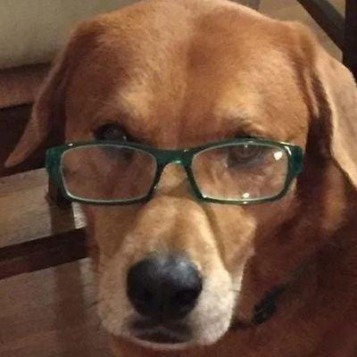 Whole Meat Dog (@PedantDog )