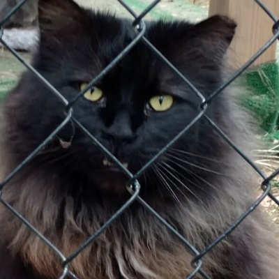 Gandolf's Legacy Cat Rescue