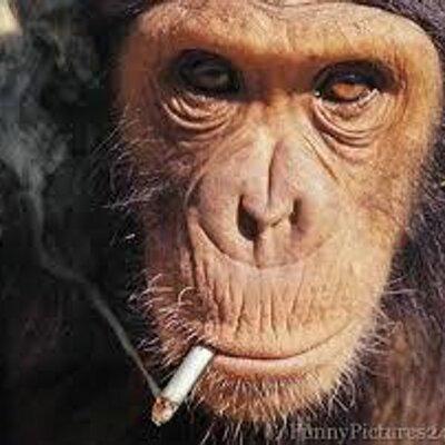 Thinking monkey by Racani on DeviantArt