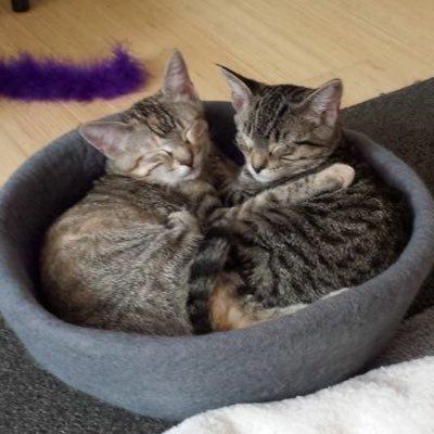 Hazel & Remy