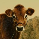 First Cow - @FirstCow - Verified Twitter account