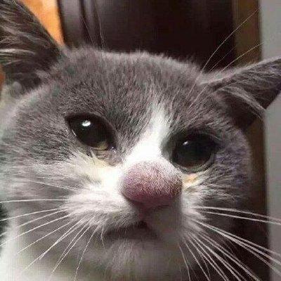 Хьюстонский Кот