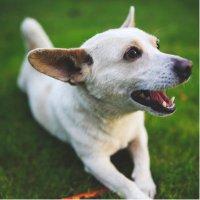 Tenacious Terriers! (@_terriers) Twitter profile photo