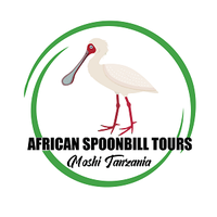 African Spoonbill Tours