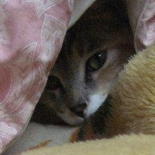 宇宙一カワ(・∀・)イイ!!三毛猫さくら。の母(人間)のアイコン
