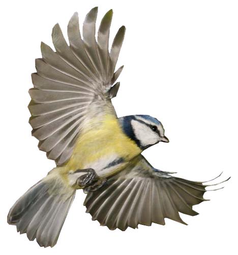 Oiseaux net twitter for Photo oiseau