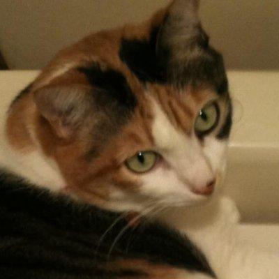 高徳ネコ先生 - Good Cat Buddhistのアイコン
