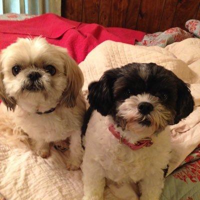 Puppies (@Puppies097) Twitter profile photo
