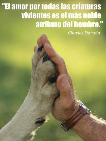 Darwin abogaba por tratar bien a los animales