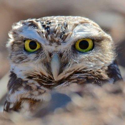The Nature Bloggist (@natureBloggist) Twitter profile photo