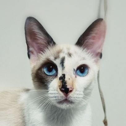 Stellar The Cat 🐈🇧🇷🇺🇸🇮🇱