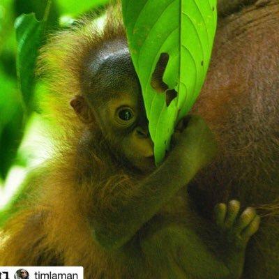 GP Orangutan Conservation